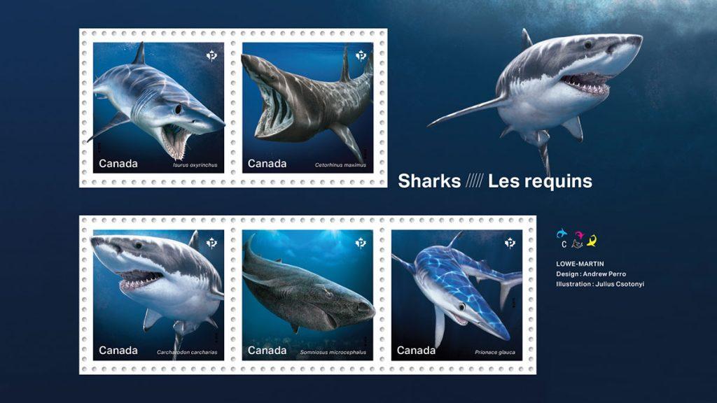 Requins timbrés